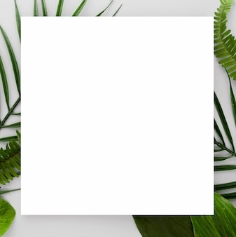 Widok z góry różnych liści z miejsca na kopię