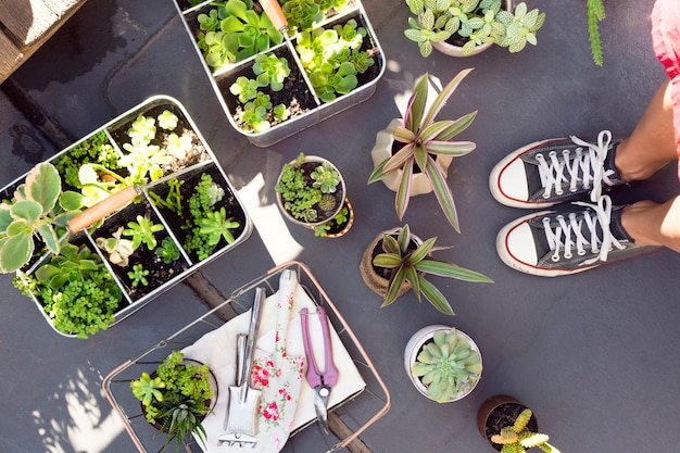 Widok z góry różnych roślin