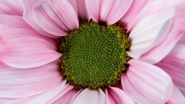 Widok z góry różowe płatki makro natura