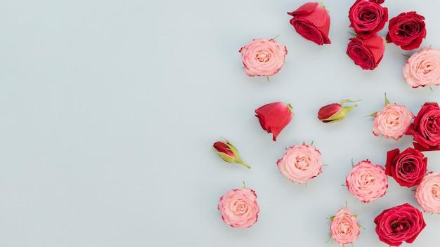 Widok z góry rozrzuconych róż