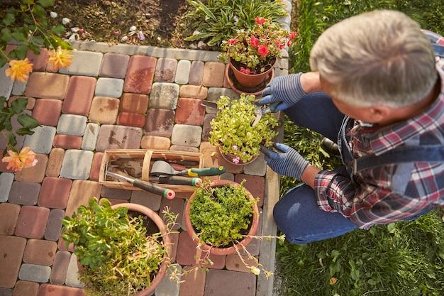 Widok z góry siwego mężczyzny klęczącego z doniczką podczas pielęgnacji rośliny szczypcami
