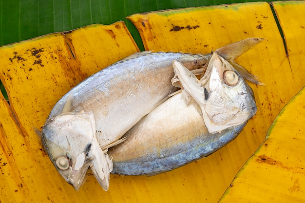 Widok z góry strzał z makreli na parze na żółtym i zielonym tle tekstury liści bananowca