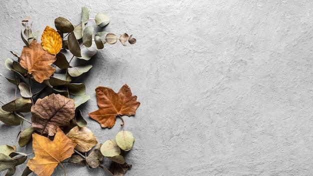 Widok z góry suche liście z miejsca na kopię