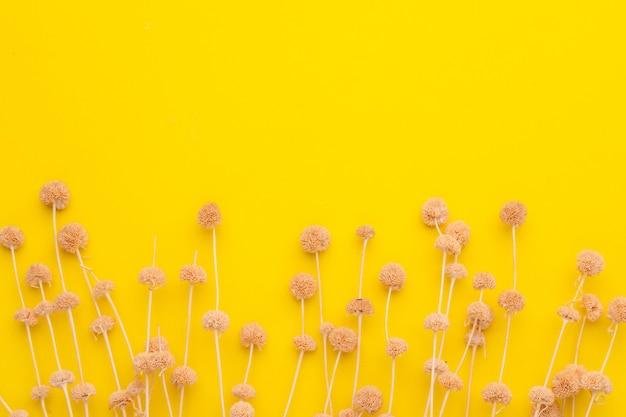 Widok z góry suchy kolor trawy kwiat do dekoracji wnętrz.