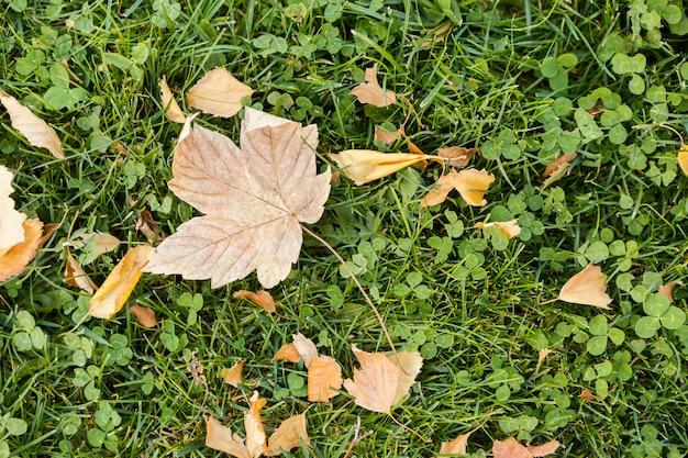 Widok z góry suchy liść na trawie