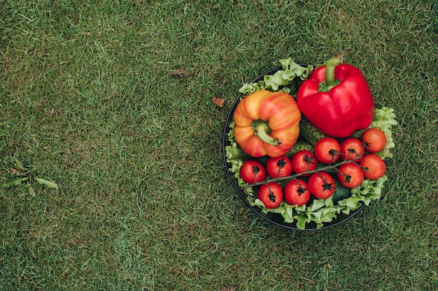Widok z góry świeże warzywa kolorowe na trawie w ogrodzie. czerwona i żółta zdrowa papryka, pomidory, ogórki i zielona sałata lyng w talerzu. pojęcie żywności i witamin.