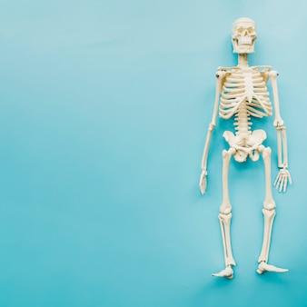 Widok z góry szkieletu