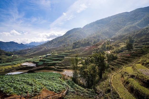Widok z góry tarasowego pola ryżowego w grudniu, sapa, wietnam. piękny górski krajobraz wietnamu. żniwa z pola ryżowego