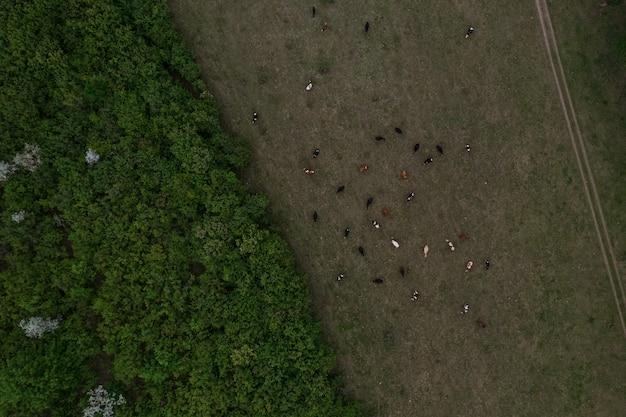 Widok z góry tekstury drzewa, ziemi i krów