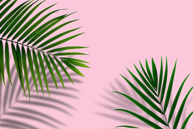 Widok z góry tropikalnego liścia palmowego na pastelowym różowym tle koloru