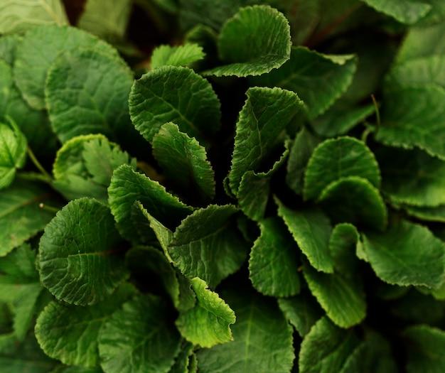 Widok z góry układ liści roślin