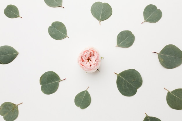 Widok z góry układ zielonych liści i róży w środku