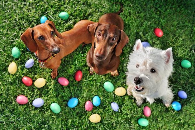 Widok z góry wielkanocnych imprez psów na trawniku