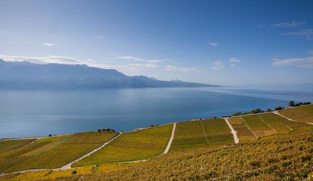 Widok z góry, winnica nad jeziorem w lozannie w październiku.