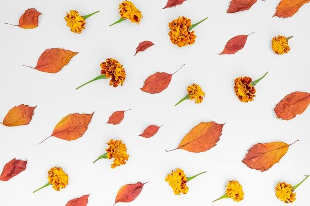 Widok z góry wzór liści