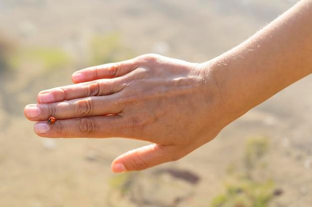 Widok z góry z biedronką na kobiecej dłoni