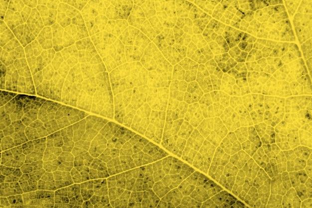 Widok z góry z bliska oświetlającego liść
