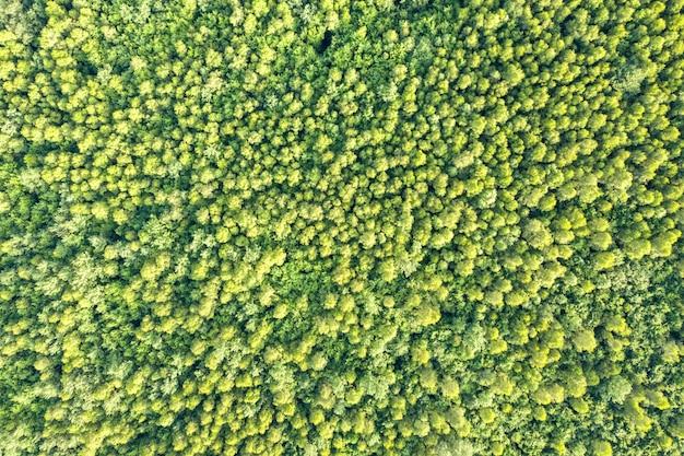 Widok z góry z lotu ptaka zielony las lato z wieloma świeżymi drzewami.