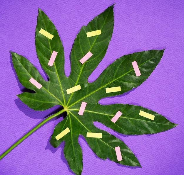 Widok z góry zbliżenie liści kasztanowca i artykuły papiernicze
