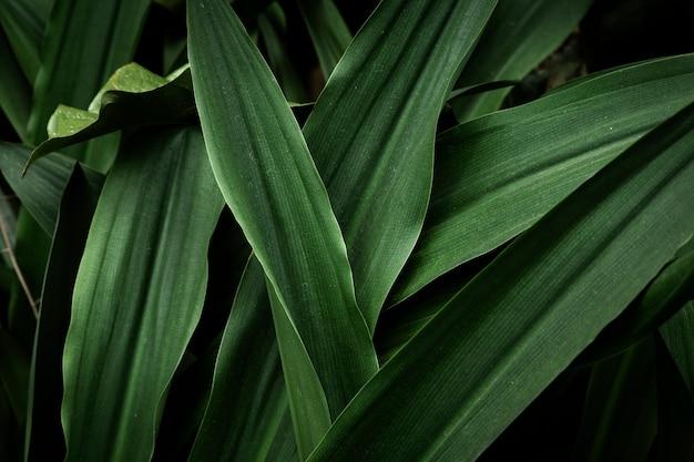 Widok z góry zielone liście tropikalne