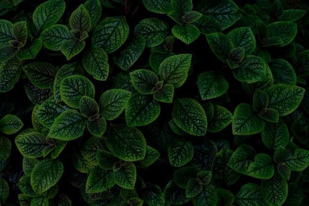 Widok z góry zielone rośliny ozdobne