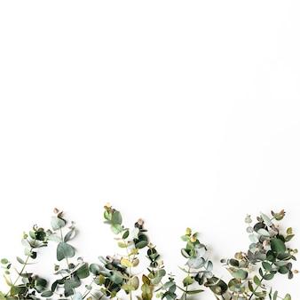Widok z góry zielonych liści