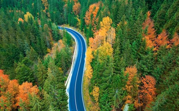 Widok z lotu ptaka drogi w pięknym zielonym lesie o zachodzie słońca jesienią. kolorowy krajobraz z jezdni, sosny w karpatach.