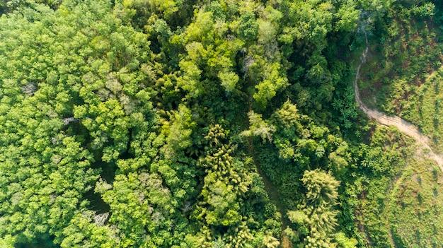 Widok z lotu ptaka drone strzał top down of green forest piękna przyroda przyrody na tle