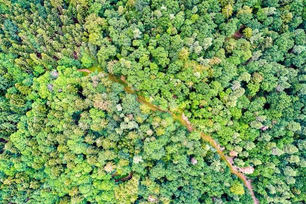 Widok z lotu ptaka drzew i drogi w wogezach - departament haut-rhin we francji
