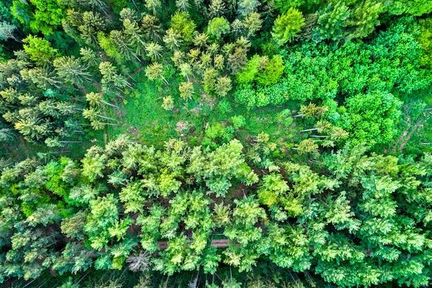 Widok z lotu ptaka drzew w wogezach północnych - departament bas-rhin we francji