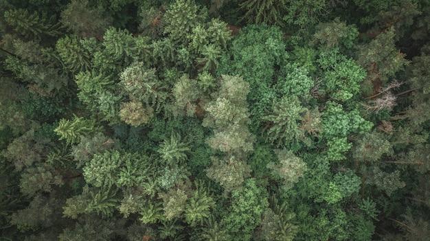 Widok z lotu ptaka drzewa w perlacher forst monachium, niemcy