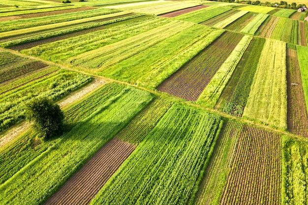 Widok z lotu ptaka drzewny dorośnięcie samotny na zielonych rolniczych polach