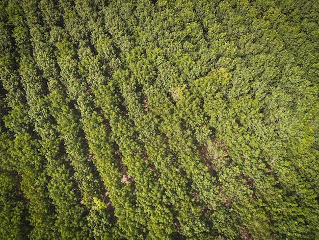Widok z lotu ptaka drzewo leśne drzewo gumowe liście środowisko las natura tło, tekstura zielonego drzewa widok z góry las z góry, plantacja drzew gumowych