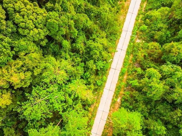 Widok z lotu ptaka drzewo w lesie z drogą