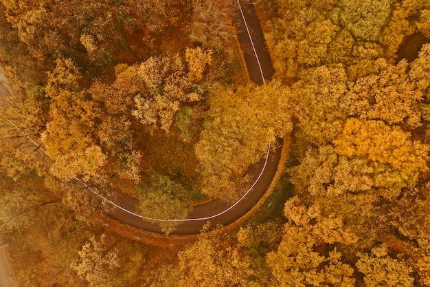 Widok z lotu ptaka gęstego lasu jesienią z drogi przecinającej
