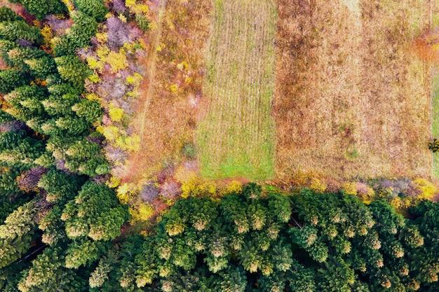 Widok z lotu ptaka górskiego lasu sosnowego z nagim obszarem wylesiania ściętych drzew.