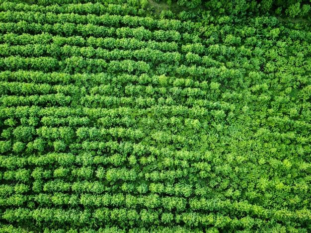 Widok z lotu ptaka gospodarstwo zielone pole obsadzone, rolnictwo. naturalne tło. zdjęcie z drona