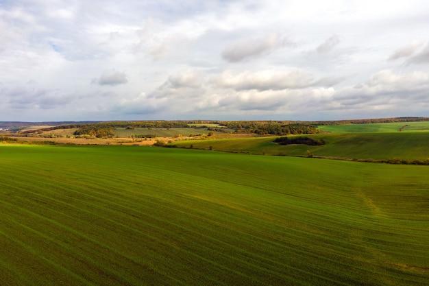 Widok z lotu ptaka jasne zielone pole uprawne wczesną wiosną.