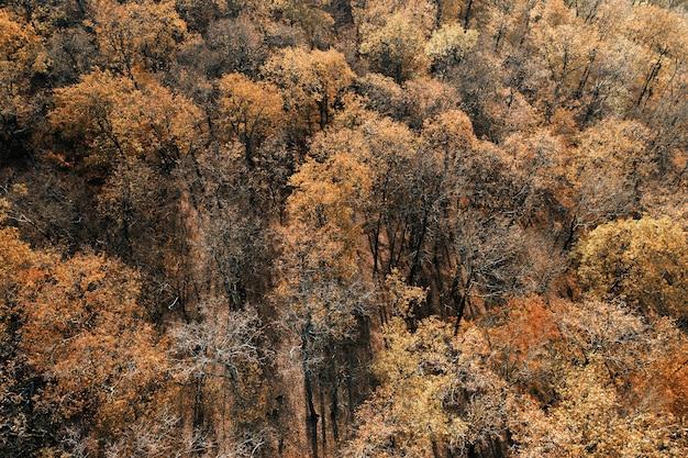 Widok z lotu ptaka jesiennych drzew