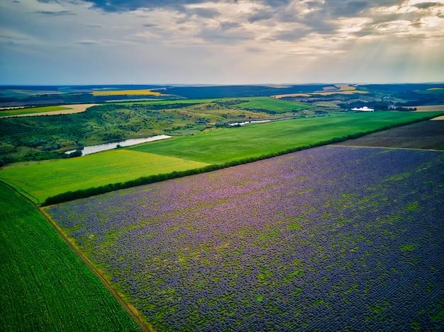 Widok z lotu ptaka krajobraz z lawendy polem