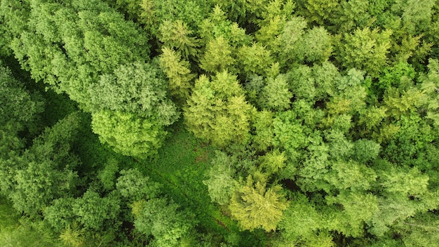 Widok z lotu ptaka las podczas letniego dnia