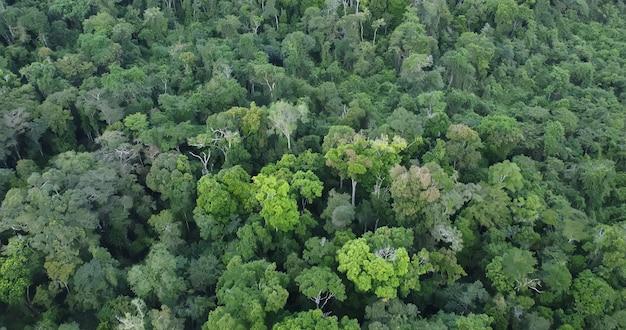 Widok z lotu ptaka lasów deszczowych amazonii w brazylii, ameryce południowej. zielony las. widok z lotu ptaka.