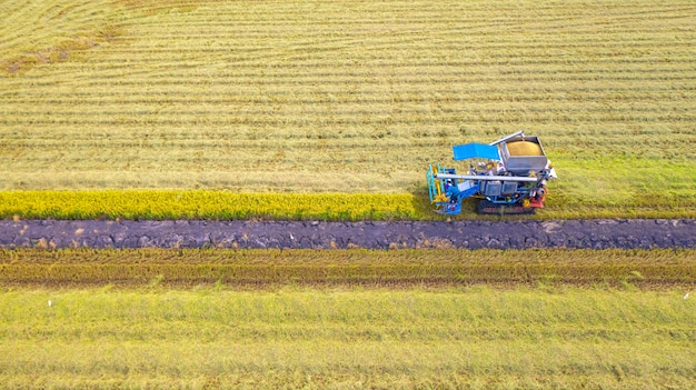 Widok z lotu ptaka maszyny harvester pracy w polu ryżu z góry