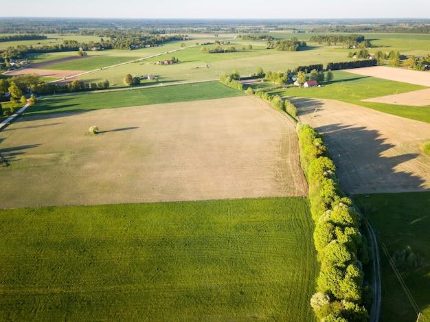 Widok z lotu ptaka na aleję drzew otoczoną polami zielonej trawy w słoneczny wiosenny dzień