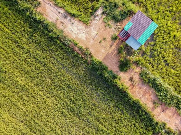 Widok z lotu ptaka na chatę w zielonym polu ryżowym