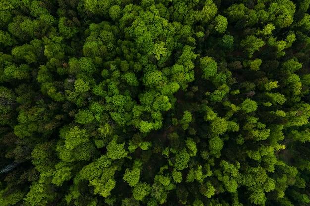 Widok z lotu ptaka na ciemny mieszany las sosnowy i bujny las z zadaszeniami zielonych drzew.
