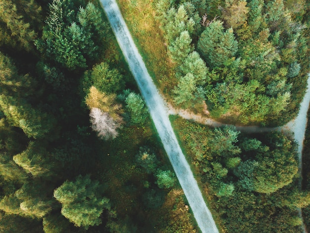 Widok z lotu ptaka na drogę w lesie