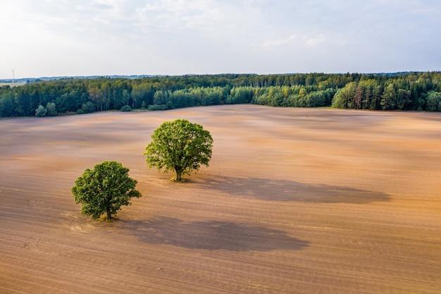 Widok z lotu ptaka na dwa drzewa na środku pola uprawnego na skraju lasu