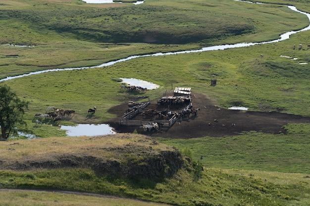 Widok z lotu ptaka na farmę, czerwone stodoły, pole kukurydzy we wrześniu. okres żniw. wiejski krajobraz, amerykańska wieś. słoneczny poranek