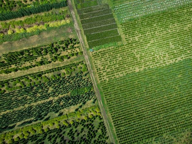 Widok z lotu ptaka na farmę drzew do kształtowania krajobrazu